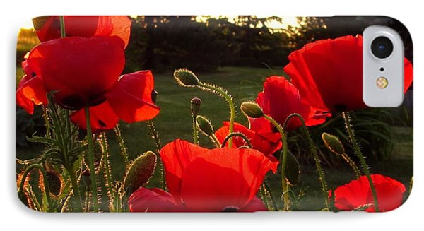 Backlit Red Poppies IPhone Case by Mary Wolf
