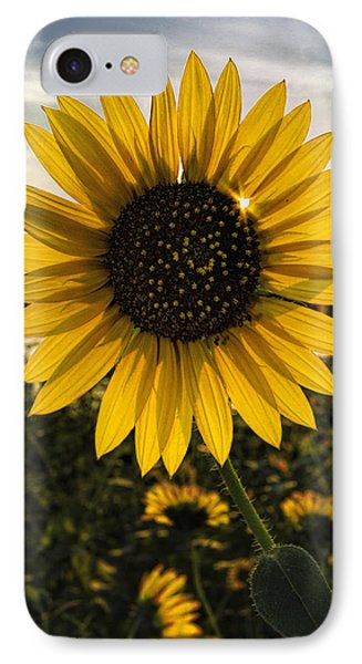 IPhone Case featuring the photograph Backlit Sunflower by Rob Graham