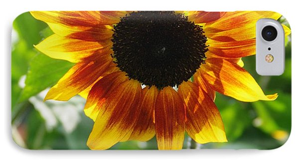 Backlit Sunflower IPhone Case by Sheila Byers