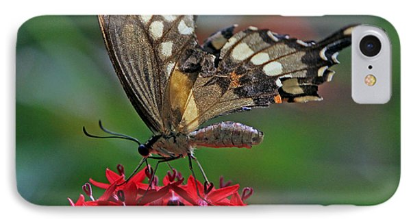 IPhone Case featuring the photograph Backlit Swallowtail by Larry Nieland