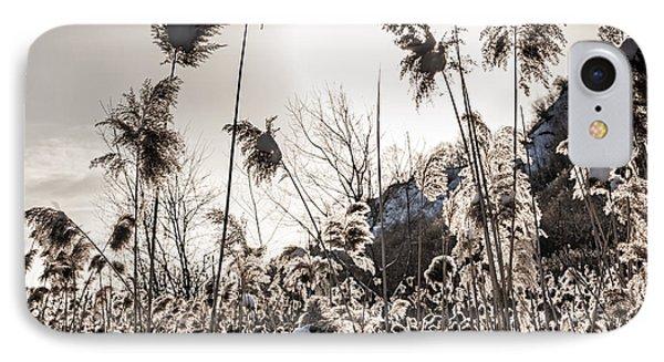 Backlit Winter Reeds Phone Case by Elena Elisseeva