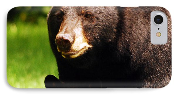 Backyard Bears IPhone Case by Lori Tambakis