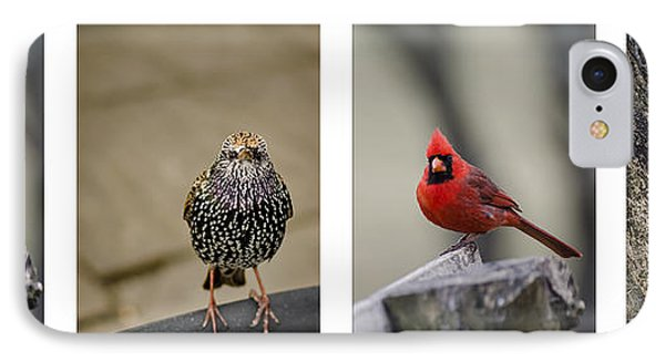 Backyard Bird Set Phone Case by Heather Applegate