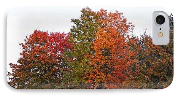 Backyard Trees IPhone Case by Judy Wolinsky