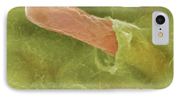 Bacteria IPhone Case by Science Stock Photography