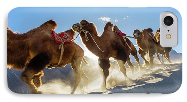 Bactrian Or Double Humped Camels IPhone Case by Peter Adams