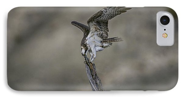 Balancing Act IPhone Case by Gary Hall