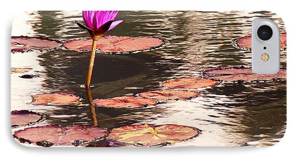 Balboa Park Water Lily IPhone Case by John Noel