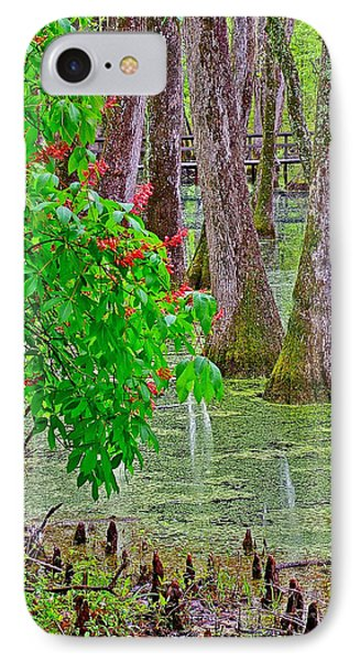 Bald Cypress And Red Buckeye Tree At Mile 122 Of Natchez Trace Parkway-mississippi Phone Case by Ruth Hager