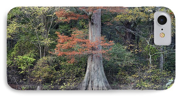 Bald Cypress In White River Nrw Arkansas IPhone Case
