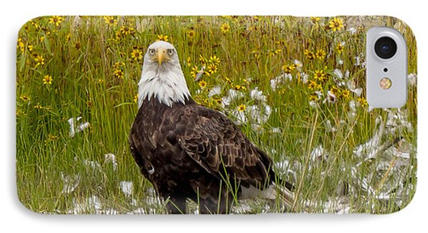 Bald Eagle @ Lunch  IPhone Case