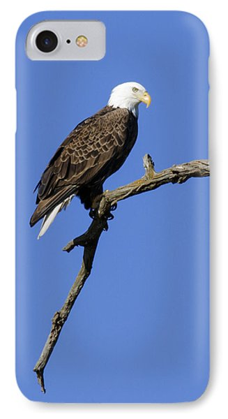 IPhone Case featuring the photograph Bald Eagle 4 by David Lester