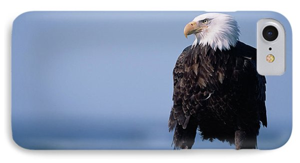 Bald Eagle At Low Tide IPhone Case by Yva Momatiuk John Eastcott