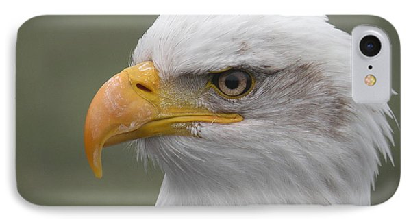 Bald Eagle IPhone Case by Brian Chase