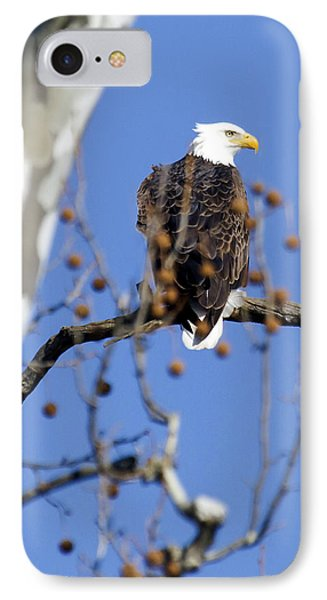 IPhone Case featuring the photograph Bald Eagle by David Lester