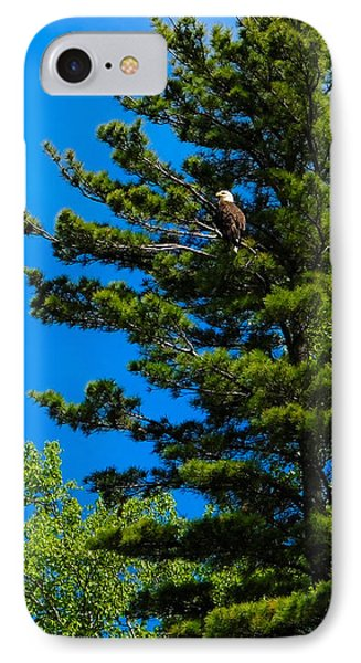 Bald Eagle   IPhone Case by Lars Lentz