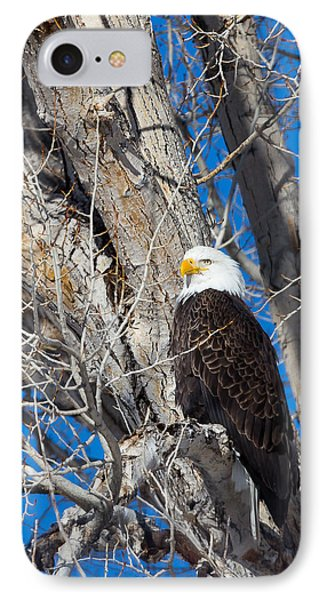 Bald Eagle IPhone Case