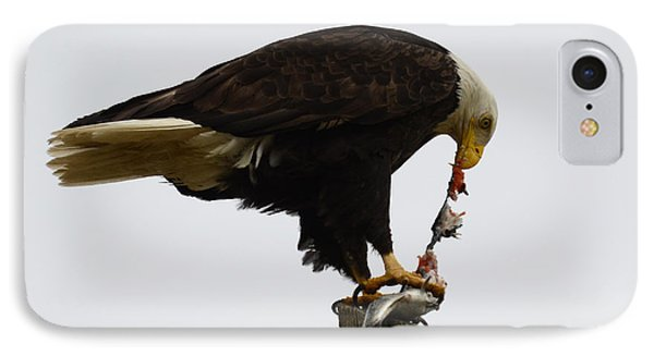 Bald Eagle Part Of Nature Phone Case by Bob Christopher