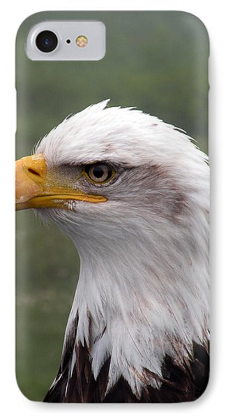 Bald Eagle Portrait Phone Case by Brian Chase