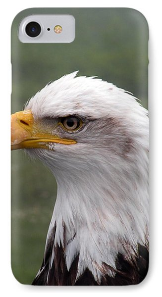 Bald Eagle Portrait IPhone Case by Brian Chase