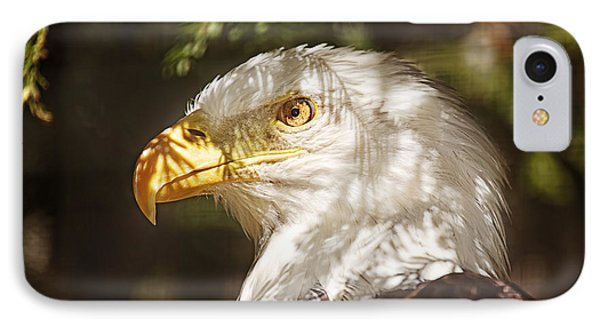 Bald Eagle Portrait  IPhone Case by Brian Cross