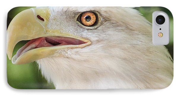 IPhone Case featuring the photograph American Bald Eagle Portrait - Bright Eye by Patti Deters