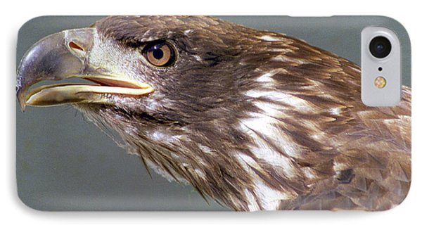 Bald Eagle IPhone Case by Steve Archbold