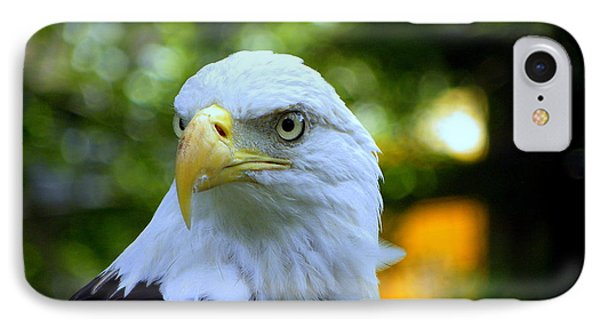 Bald Eagle IPhone Case by Terri Mills