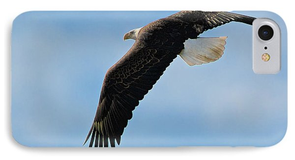Bald Eagle Turning IPhone Case by Stephen  Johnson