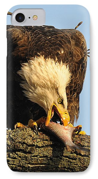 Bald Eagle With Fish 2 Phone Case by Angel Cher