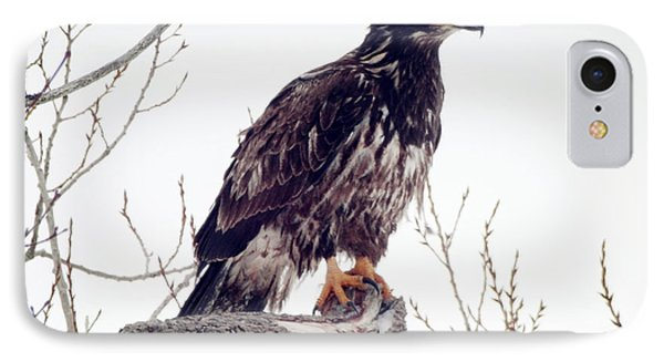 IPhone Case featuring the photograph Bald Eagle by Zinvolle Art