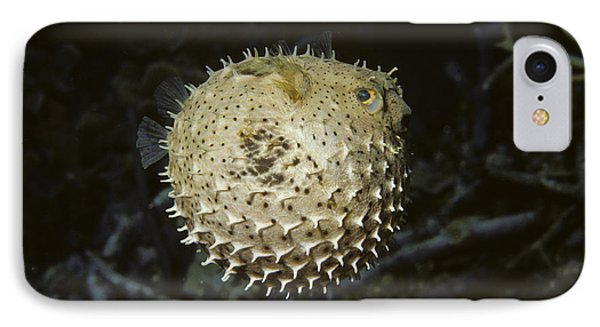 Balloonfish IPhone Case