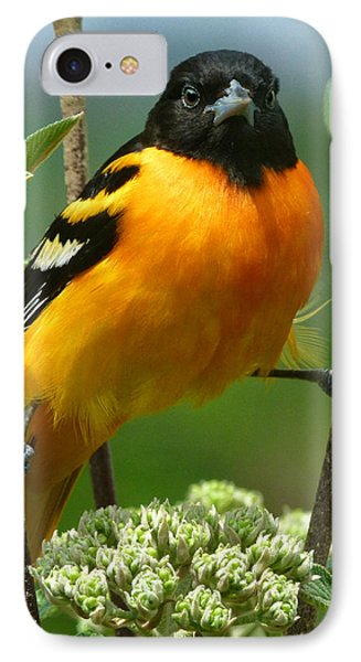Oriole iPhone 7 Case - Baltimore Oriole by Bruce Morrison
