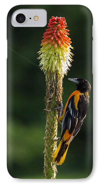 IPhone Case featuring the photograph Baltimore Oriole Delight 2 by David Lester