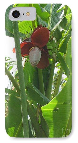Banana Birth IPhone Case