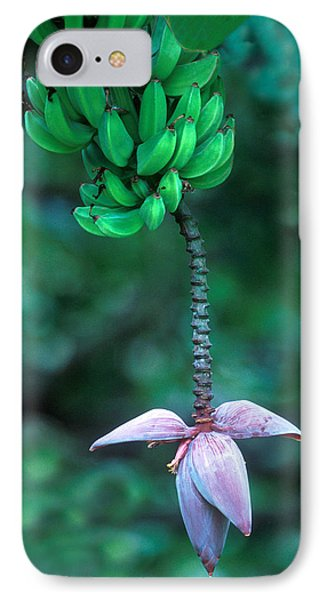 Banana Flower IPhone Case by Panoramic Images