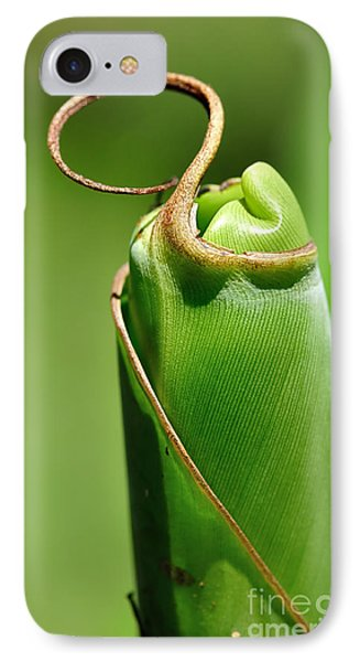Banana Palm Frond Ready To Unfurl IPhone Case