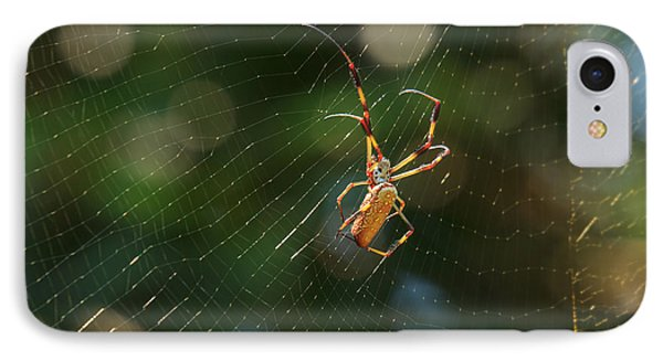 Banana Spider In Web IPhone Case