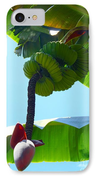 Banana Stalk Phone Case by Carey Chen