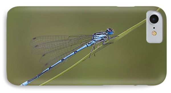 Banded Agrion Damselfly IPhone Case by Frank Derer