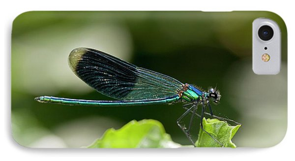 Banded Demoiselle Damselfly IPhone Case by Bob Gibbons