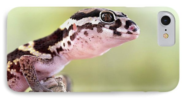 Banded Gecko IPhone Case by Nicolas Reusens