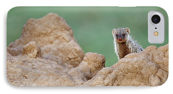 Banded Mongoose On Termite Mound IPhone Case by Adam Jones