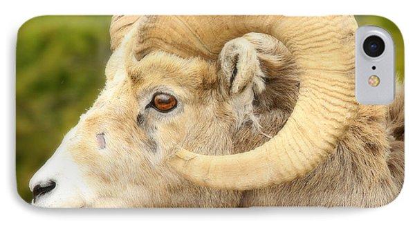 Banff Bighorn Phone Case by Stephen Stookey