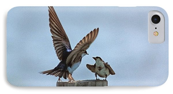 Bank Swallow Romance IPhone Case by John Harmon