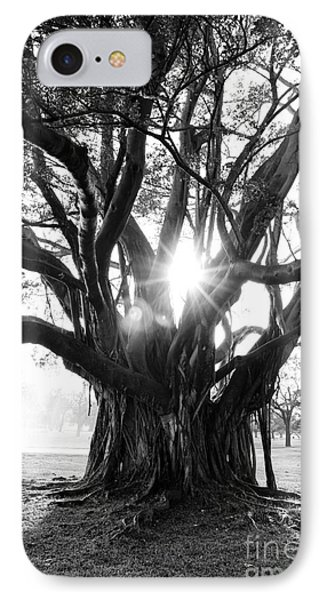 Banyan Tree IPhone Case by Alison Tomich
