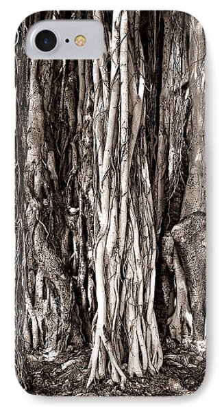 Banyan Tree IPhone Case by James David Phenicie