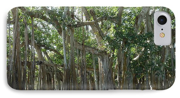 Banyan Tree IPhone Case by Kay Gilley