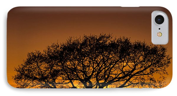 Baobab IPhone Case by Davorin Mance