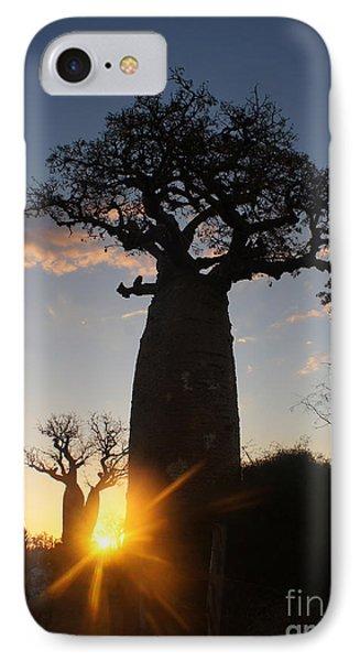 baobab from Madagascar 6 IPhone Case